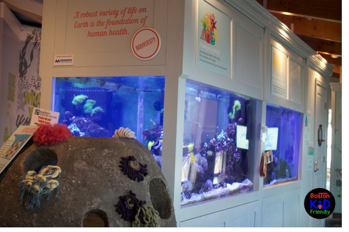 Exhibit within the Seacoast Science center with fish tanks.