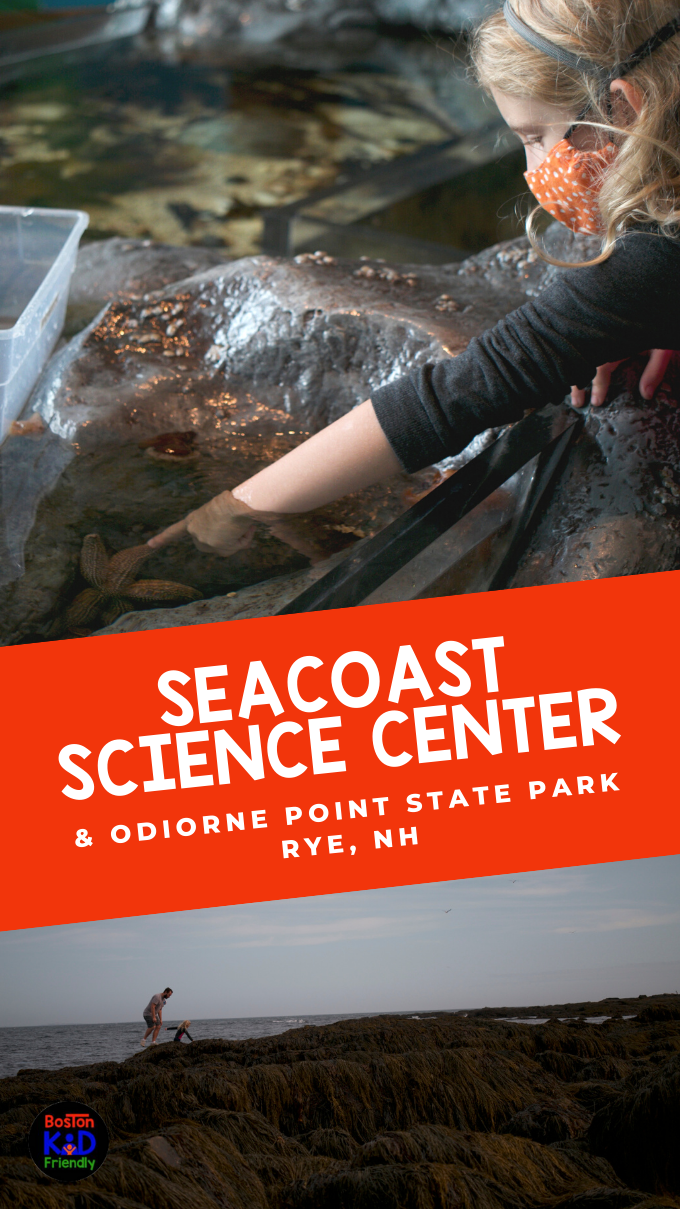 exploeing touch tank in science center and tidal pools in odiorne point state park